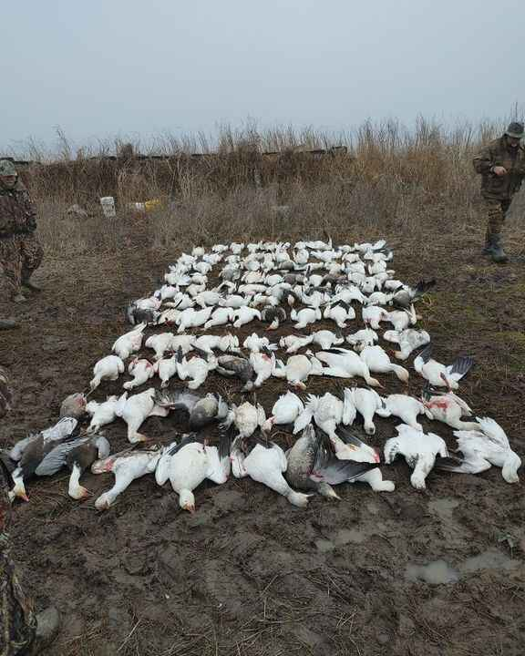 Photos from Rollin Snows Outfitters's post