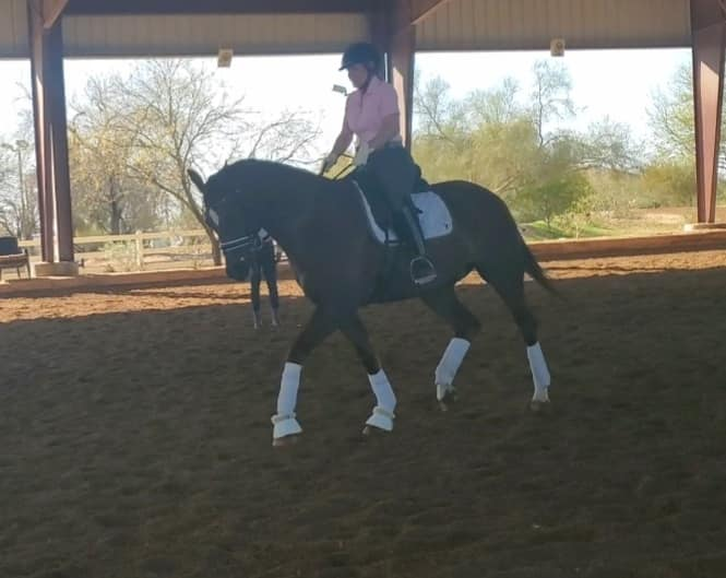 Photos from CB Dressage's post